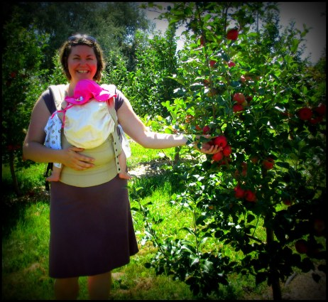 Calla's first apple-picking.